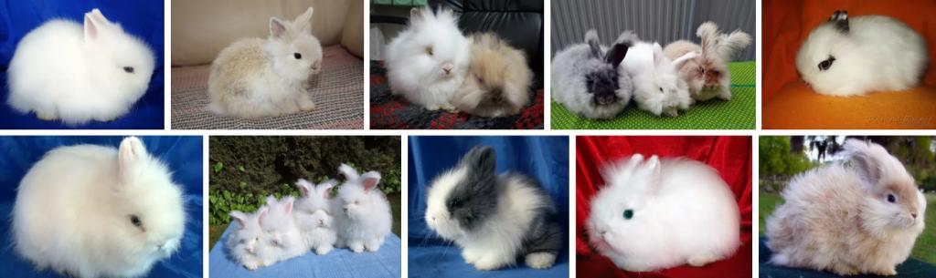 какие породы кроликов бывают,кролики,бывают кролики,как называются кролики,маленькие кролики,мини кролики,какие они мини кролики