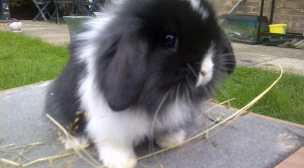 какие породы кроликов бывают,кролики,бывают кролики,как называются кролики,маленькие кролики,мини кролики,какие они мини кролики,