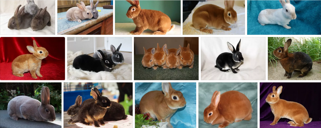 Зоомагазины и товары для животных по выгодным ценам,интернет-магазин зоотоваров,зоотовары,