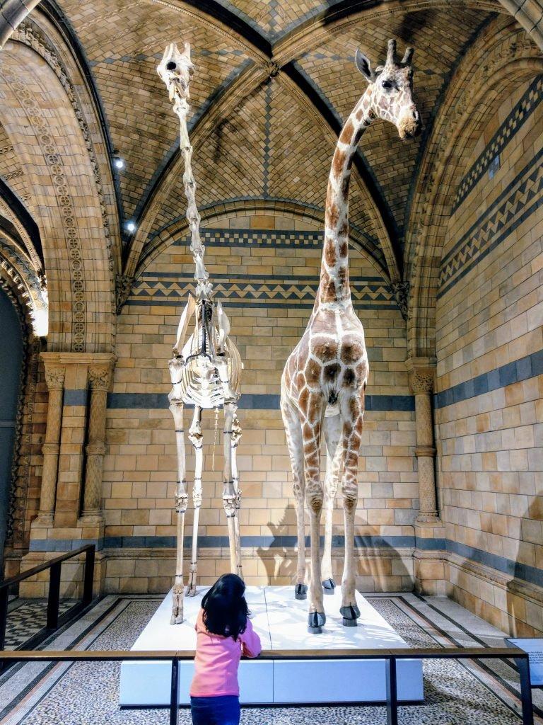 Фото из Музея Естественной Истории в Лондоне