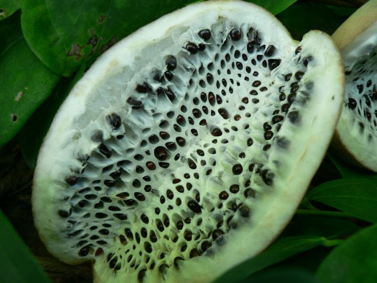 10 Фкебия фрукт