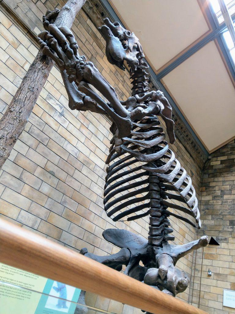 Skelet Lenivtsa