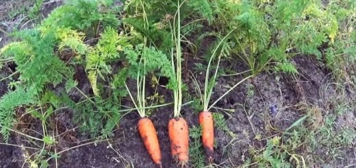сохранение урожая