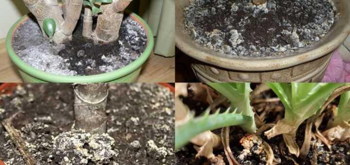 Как избавиться от плесени в цветочных горшках