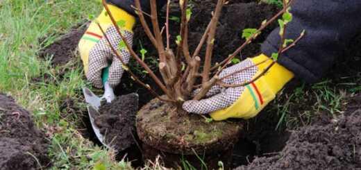 осенняя посадка деревьев