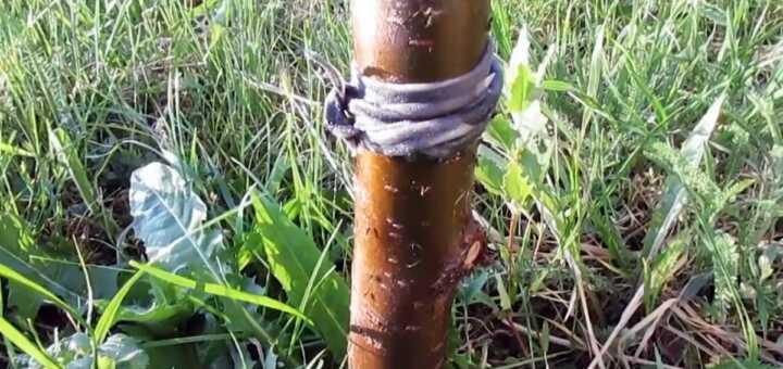 способ боьбы с муравьями и тлей