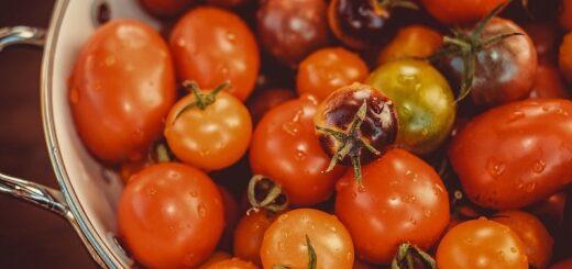 осенняя посадка помидор