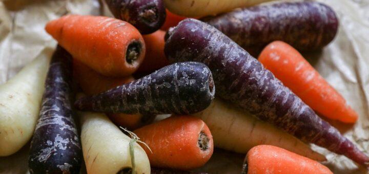 morkov fioletovaya