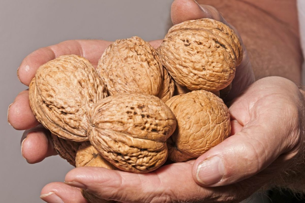 chto mozhno prigotovit iz orehov